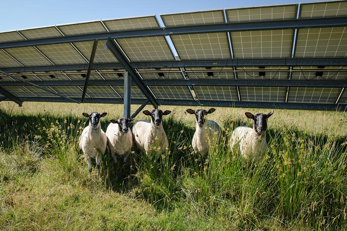 Horam Solar Farm | Belltown Power