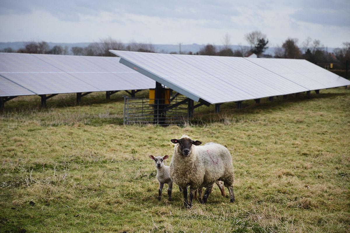 Watchfield Solar Farm